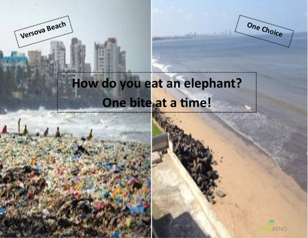 Environmental Tragedy to Triumph