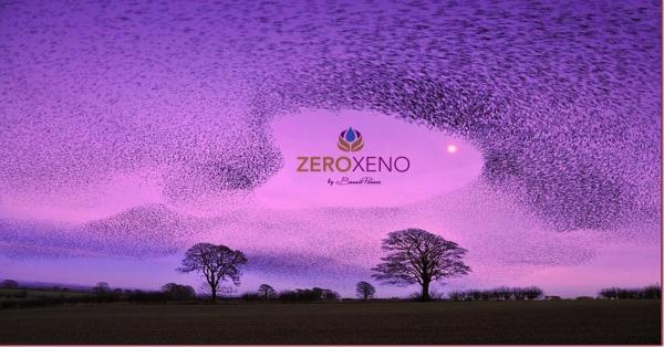 Zero Xeno Seeks Murmurations!